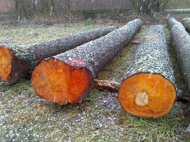 Holzstamm Erle